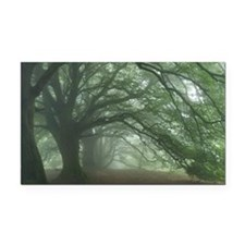 Ancient Beech woodland Rectangle Car Magnet
