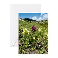 Actylorhiza sambucina Greeting Card