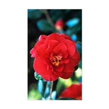 Camellia flower Decal