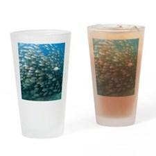 School of fish Drinking Glass