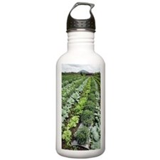 Cabbage and chilies cu Sports Water Bottle