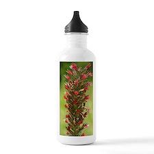 Bugloss (Echium russic Water Bottle