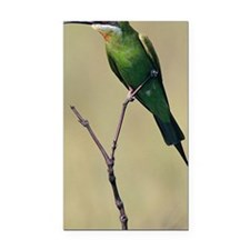 Blue-cheeked bee-eater, breed Rectangle Car Magnet