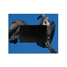 Vultures Picture Frame