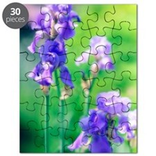 Bearded iris (Iris germanica) Puzzle