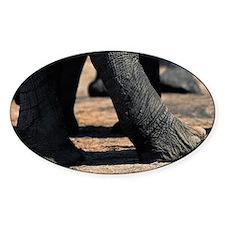 Elephant (Loxodonta africana), legs Decal