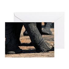 Elephant (Loxodonta africana), legs  Greeting Card