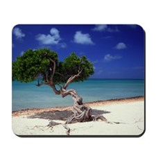 Divi Divi tree on beach of Caribbean Sea Mousepad