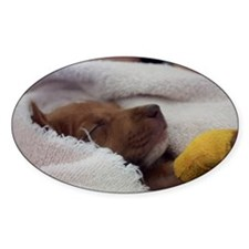 Buttercup Sleeping Decal