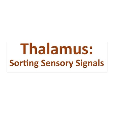 Thalamus 20x6 Wall Decal