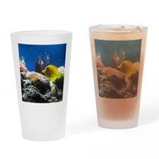 Yellow fish Drinking Glass