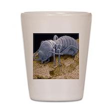 Worker termite, SEM Shot Glass
