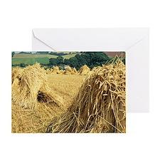 Wheat sheaves Greeting Card