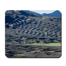 Vineyard in lava rock dugouts Mousepad