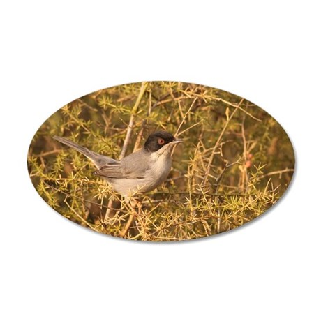 Sardinian Warbler 35x21 Oval Wall Decal
