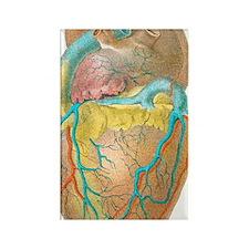 Heart anatomy, artwork Rectangle Magnet