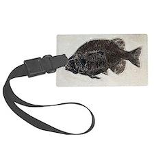 Phareodus fossil fish Luggage Tag