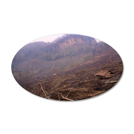 Slash and burn agriculture 35x21 Oval Wall Decal