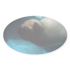 Steller sea lion 5 Decal