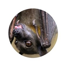 """Straw-colored fruit bat 2 3.5"""" Button"""