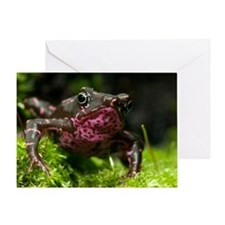 Poisonous toad Greeting Card