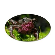 Poisonous toad Wall Decal