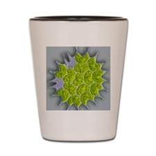 Pediastrum green algae, light micrograp Shot Glass