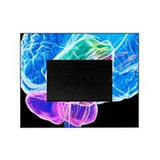 Brain anatomy, artwork Picture Frame