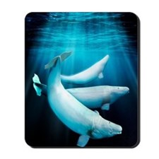 Beluga whales, artwork Mousepad