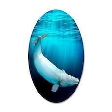 Beluga whale, artwork 35x21 Oval Wall Decal