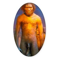Models of Homo erectus men Decal