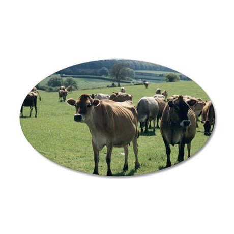 Jersey cows 35x21 Oval Wall Decal