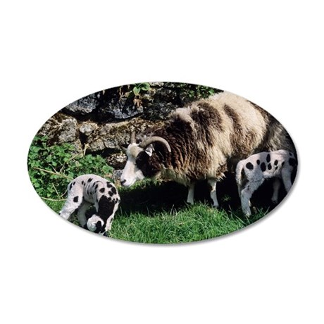 Jacob sheep 35x21 Oval Wall Decal