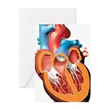 Human heart anatomy, artwork Greeting Card