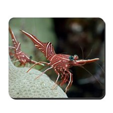Hingebeak shrimp on a reef Mousepad