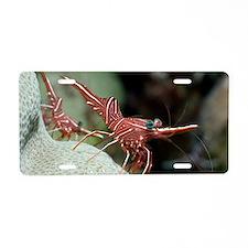 Hingebeak shrimp on a reef Aluminum License Plate