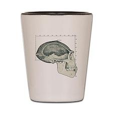 Homo erectus skull Shot Glass