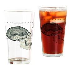 Homo erectus skull Drinking Glass