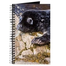 Grey seal pup Journal