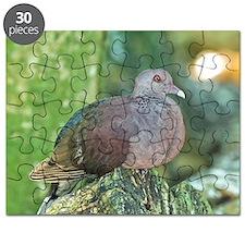 Malagasy turtle dove Puzzle