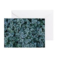 Frost on nettles Greeting Card
