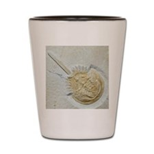 Fossilised horseshoe crab Shot Glass