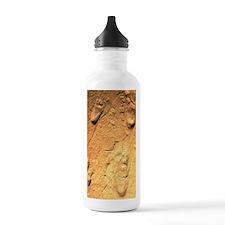 Fossilised hominid foo Water Bottle