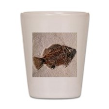 Fossilised fish, Priscacara serata Shot Glass