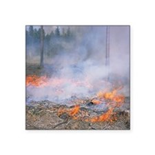 "Forest fire Square Sticker 3"" x 3"""