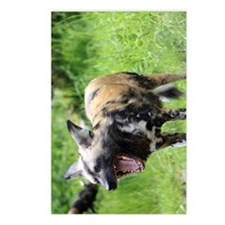 African wild dog 6 Postcards (Package of 8)