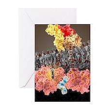 Growth hormone receptor, molecular m Greeting Card