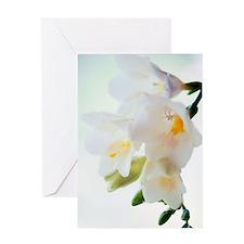 Freesia sp Greeting Card