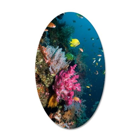 Coral reef, Indonesia 35x21 Oval Wall Decal
