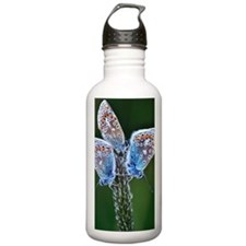 Common Blue Butterflie Water Bottle